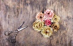 Torka snittrosor och rostig sax på en gammal träbakgrund Döda blommor Fotografering för Bildbyråer