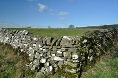 torka stenväggen Arkivbilder