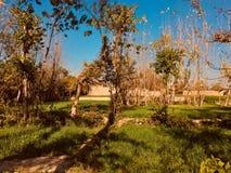 Torka tjänstledighetträd med nytt grönt gräs Arkivfoton
