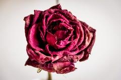 Torka upp det rosa slutet Fotografering för Bildbyråer