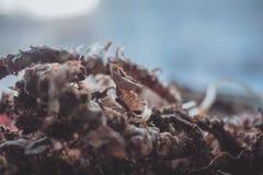 torka växten arkivfoto