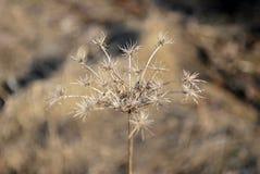torka växten arkivbilder