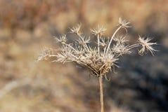 torka växten arkivbild
