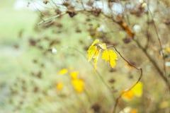 Torka växten som fotograferas i vinter Arkivfoto