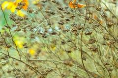 Torka växten som fotograferas i vinter Arkivfoton