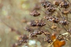 Torka växten som fotograferas i vinter Royaltyfri Bild