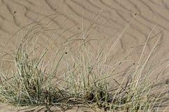 Torka växter i en sandig jordning royaltyfri bild