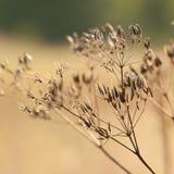 Torka växter med Royaltyfri Foto