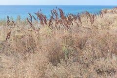 Torka växter på kusten Arkivfoto