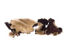 torkad ätlig svampmakro Arkivfoton