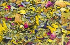 Torkad ört- och blommatextur Fotografering för Bildbyråer