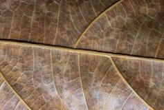 Torkad bladcloseup Foto för makro för höstbladtextur Gul bladådermodell Royaltyfria Foton