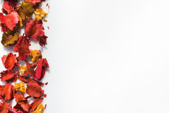 torkad blom- sida Royaltyfria Bilder