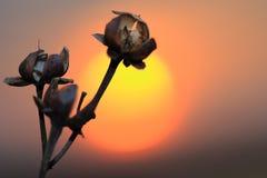 torkad blomma arkivfoto