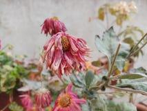 torkad blomma fotografering för bildbyråer