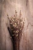 torkad blomma Royaltyfria Foton