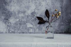 Torkad blomma i flaskan, minimalism i stilleben arkivfoto