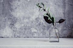 Torkad blomma i flaskan, minimalism i stilleben arkivbilder