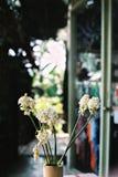 Torkad blomma i vas Royaltyfri Foto