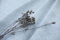 Torkad blomma på grått tyg fotografering för bildbyråer