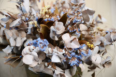 Torkad blommaLunaria och statice - herbarium Arkivfoton