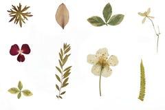 Torkad blommor och herbarium arkivbilder