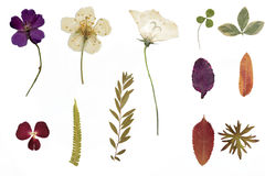 Torkad blommor och herbarium royaltyfri fotografi