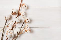 Torkad bomullsblommabakgrund på vitt trä, bästa sikt Royaltyfria Foton