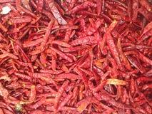 torkad chili Royaltyfri Foto