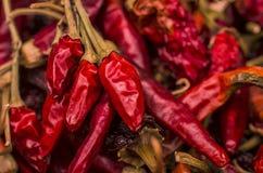 torkad chili Royaltyfri Fotografi