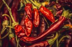 torkad chili Royaltyfri Bild