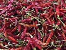 torkad chili Fotografering för Bildbyråer