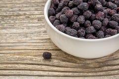 Torkad chokeberry (aroniaen) Fotografering för Bildbyråer