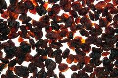 torkad cranberry royaltyfria bilder