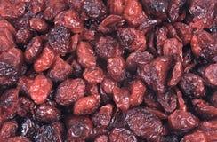 torkad cranberry - frukt arkivbild