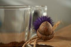 Torkad ekollon på en brun pappers- påse Ekollonkaffebegrepp royaltyfri fotografi