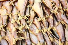 Torkad Fish01 Arkivbild