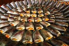 Torkad Fish04 Arkivbild