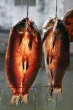 torkad fisk Royaltyfri Bild