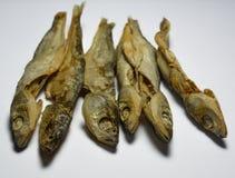 Torkad fisk - Cironi Royaltyfria Bilder