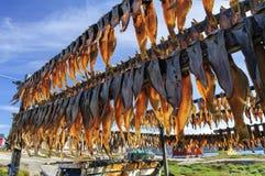 Torkad fisk i den Rodebay bosättningen Arkivbild