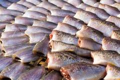 Torkad fisk på bamburastret i den soliga dagen Fotografering för Bildbyråer