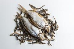Torkad torkad fisk på en grå bakgrund arkivbilder