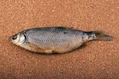 Torkad fisk på en kork Arkivbild