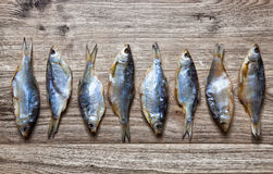 Torkad fisk på en träbakgrund Arkivbild