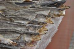 Torkad fisk på marknaden. Royaltyfri Bild