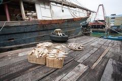 Torkad fisk på pir på fiskeporten av Macao. Arkivbild