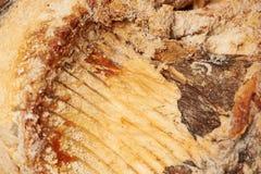 Torkad fisk på tabellen ölmellanmål till Royaltyfria Foton
