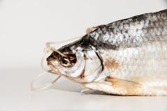 Torkad fisk på tabellen Royaltyfri Bild