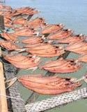 Torkad fisk som förläggas i ett kuggebambumagasin på soldagljus med havssikt Royaltyfri Bild